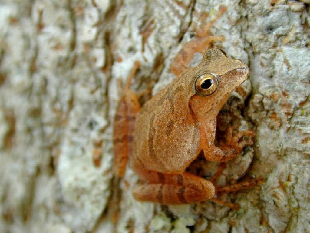 Frog Factors | Ponds/Streams/Waterfalls