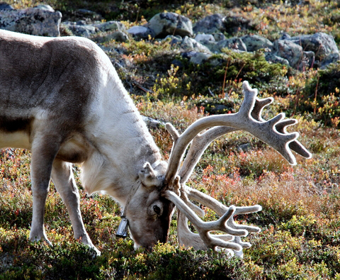 Reindeer-Proof Holidays