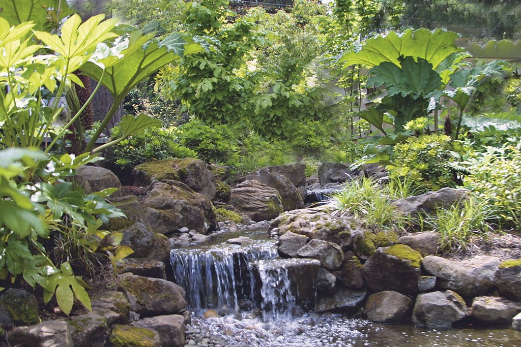 Photo courtesy Hughes Water Gardens, Wilsonville, Ore.