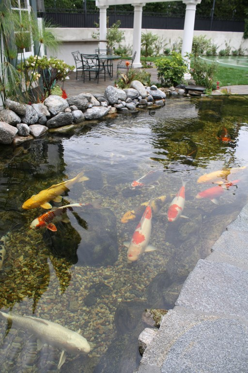 Split level pond ponds streams waterfalls watershapes for Fish pond preparation