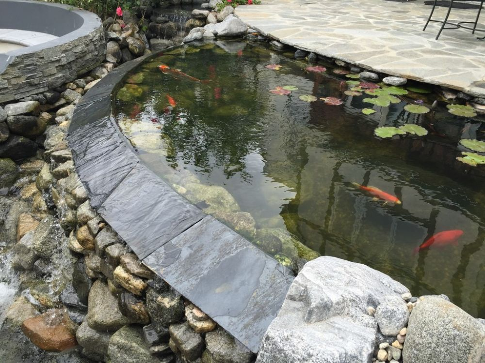 Split level pond ponds streams waterfalls watershapes for Keeping koi in a pond