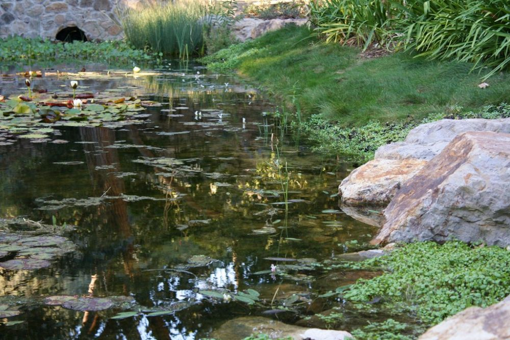Among All Of The Elements Defining Superior Naturalistic Watershapes Accomplished Pond Stream Specialists Know