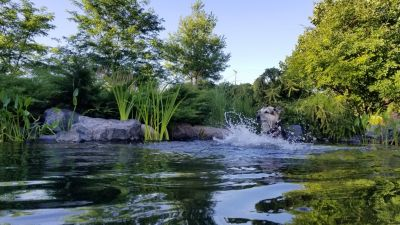 Whether ponds are built for it or not, many will encourage a swim, inspire a dive or invite a cooling dip. That's why Larry Carnes guides his clients who want to get wet toward naturalistic pond designs that are also deliberately made for easy access, bather comfort and everyone's safety.
