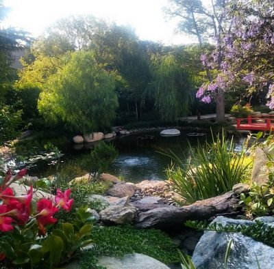 When a client approaches a designer with something specific in mind, working out project parameters can be a challenge.  But in this case, writes Steve Sandalis, the homeowner offered guidance for a backyard pond that was more than welcomed -- and inspired indeed.