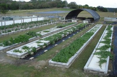 Pond professionals have a unique opportunity to put food on their clients' tables, writes James Rakocy.  All it takes is opening up the design process to a discipline called 'aquaponics,' which puts fish to work in encouraging the growth of a range of water-loving edible plants.