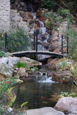 Mastering the fine points of stream, pond and waterfall design and construction generally takes years of patient practice, but 22-year-old Tim Krzeminski seems bent on condensing the process:  Already, his work has a sophistication and visual appeal that delight those who see it; as important, he has a growing list of clients who are more than willing to let him exceed their expectations and make the most of the spaces they offer him.