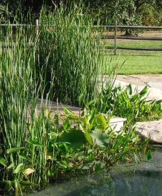 Plants and swimming pools go together beautifully, says watershaper James Robyn, particularly when a pool is flanked by a gorgeous stream and pond.  And as he observes in discussing a recent project that included participation of master watergardener Anthony Archer Wills, it gets even more interesting when you set things up in such a way that the all of the systems can be combined into one fully functional 'natural pool' in the future.