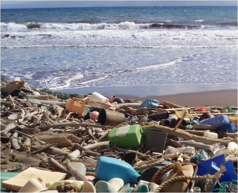Plastic Pollution on Shoreline